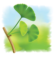 Twig with leaves of ginkgo biloba on fullcolor bac vector image