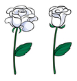 Two white roses vector image vector image