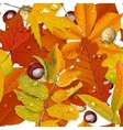 Seamless pattern from autumn leaves on the white vector image