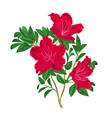 red rhododendron twig vintage vector image