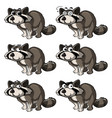raccoon with different expressions vector image