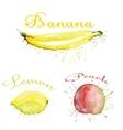 watercolor fruit set with blots vector image