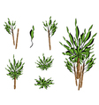 A Set of Isometric Yucca Tree or Dracaena Plant vector image vector image