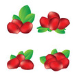 pomegranate seed fruit vector image
