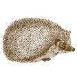 engraving hedgehog vector image