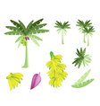 Set of Banana Tree with Bananas and Blossom vector image vector image