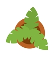 Bush home green plant in pot culture top view vector image