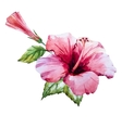 Watercolor hibiscus flower vector image