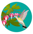 bleeding heart flowers and hummingbird isolated vector image