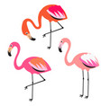 flamingo flat style vector image