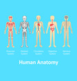 cartoon color human anatomical system card poster vector image