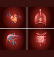 four different parts of human organs vector image