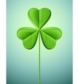 Isolated Shamrock vector image