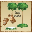 Funny Squirrel tied to a tree upside down vector image