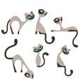 siamese elegant cats design set vector image