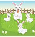 Of Cute Rabbits vector image vector image