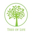 Symbol of the tree of life vector image