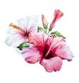 Watercolor hibiscus flower vector image