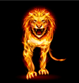 Fire lion vector image vector image