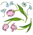 set of tulips vector image