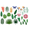 tropical elements collection vector image