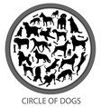 Circle of Dogs vector image vector image