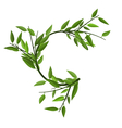 Curved Round Branch Bamboo Green Leaves vector image