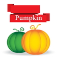fresh pumpkin on white background vector image