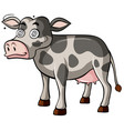 dizzy cow on white background vector image