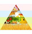 healthy food pyramid vector image