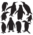 penguins silhouette vector image