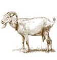 engraving big goat vector image