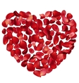 heart made petals vector image