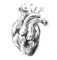 sketch of human heart vector image