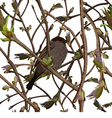 Branches with new green shoots or sprout and bird vector image
