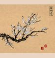 oriental sakura cherry tree in blossom on vintage vector image