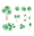 Isometric of Lady Palm Tree on White Background vector image