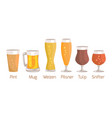 pint and mug weizen on white vector image