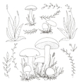 mushrooms and plants vector image