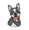 bulldog with middle finger isolated vector image