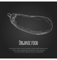 Hand drawn eggplant over white background vector image