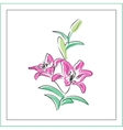 Lily flowers on a white background vector image