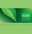 fresh green leaf with water droplets vector image