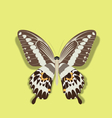 Realistic Papilio Gigon Butterfly vector image