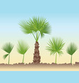 set of fan palm round leaves fan palm tree vector image