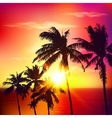 Palm silhouettes on summer sunset vector image vector image