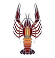Bright crawfish zodiac Cancer sign vector image