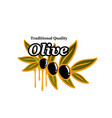 olives branch icon for olive oil product vector image