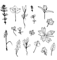 set of ink drawing herbs leaves and vector image
