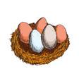 fresh eggs hand draw vector image